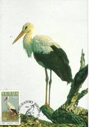 Venda 1984 Migratory Bird,11c White Stork ,maximum Card - Venda