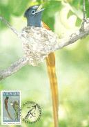 Venda 1984 Migratory Bird,20c Paradise Flycatcher,maximum Card - Venda