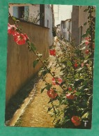 Ars-en-Ré île De Ré (07-Ardèche) Le Paradis Des Roses Trémières 2 Scans - Ile De Ré