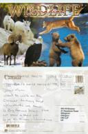 Wildlife, Alberta, Canada Postcard Posted 2011 Stamp - Alberta