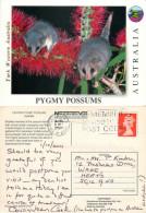 Pygmy Possums, Australia Postcard Posted 2001 Stamp - Australie
