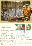 Amazon, Manaus, Brazil Postcard Posted 2001 Stamp - Manaus