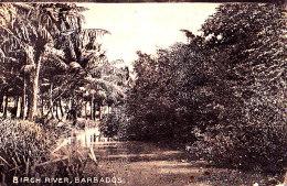 BARBADOS / BIRCH RIVER   / CIRC 1925 - Barbados