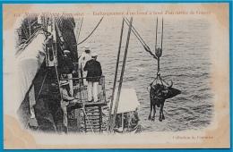 En L'état CPA Marine Militaire Française - Embarquement D'un Boeuf à Bord D'un Navire De Guerre ° A. Couturier Militaria - Warships