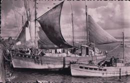 DOUARNENEZ Malamok Dans Le Port De Pêche (1955) - Douarnenez
