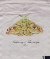ITALIA : Suikerzakje/Sachet De Sucre/Sugar Package: VLINDER,PAPILLON,BUTTERFLY,  ## Saturnia Pavonia - CINA ## - Sucres