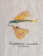 ITALIA : Suikerzakje/Sachet De Sucre/Sugar Package: VISSEN,POISSONS,FISHES, ##DACTYLOPTENA ORIENTALIS – Pesce Volante## - Sucres