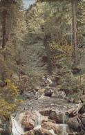 AK River Forest Foret Germany Waterfalls Place To Identify, Aufnahmen Von Hans Hildenbrand - Deutschland