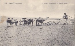 Uzbekistan - Tourkestan - Sand Desert Near Perovsk - Camel - Uzbekistan