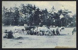 TIMOR PORTUGUÊS - Tipos E Costumes (Acampamento) - Timor Oriental
