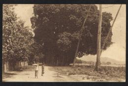 TIMOR PORTUGUÊS - Gigantescos Gondões De Lecidere (Bidau) - East Timor