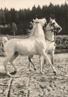 CPSM - MARBACH - CONCOURS DE DRESSAGE  CHEVAUX - Edition Foto-Dohm - Pferde