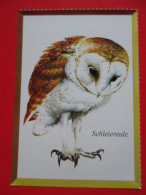 H4-Postcard-Barn Owl, Schleiereule -Tyto Alba - Vögel