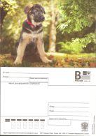 Russia 2016 # 171/1 Postal Stationery Postcard Unused - Dogs - Hunde