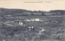 Genk Genck - Campine Limbourgeoise  Marécages (animation, Vache, Koe, 1914) - Genk