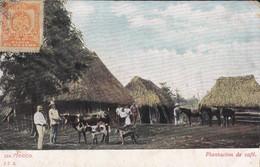 MEXIQUE---MEXICO---plantacion De Café-- Voir 2 Scans - Mexique