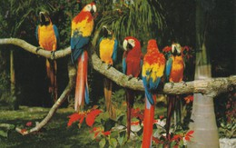 PANAMA---guacamayos Y Poinsettias--( Oiseaux Perruches Perroquets) Voir 2 Scans - Panama