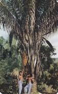 PANAMA--crossroads Of The World--- Voir 2 Scans - Panama