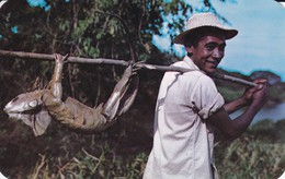 "PANAMA--the Iguana  ""panama Chicken""--- Voir 2 Scans - Panama"
