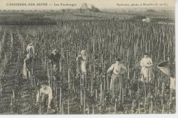 CARRIERES SUR SEINE - Les Vendanges - Carrières-sur-Seine