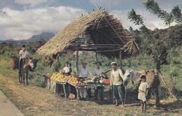 PANAMA--Un Ranchito Tipico Donde Se Venden Frutas.....-- Voir 2 Scans - Panama