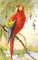 [DC3458] CPA - PAPPAGALLO - STAMPATA IN SVIZZERA - N° 119 - Non Viaggiata - Old Postcard - Uccelli
