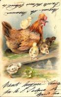 [DC3460] CPA - GALLINA CON PULCINI - N° 120 - Viaggiata 1904 - Old Postcard - Animali
