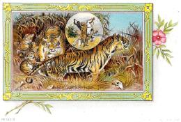 [DC3462] CPA - TIGRI DEL BENGALA CON CUCCIOLI - BENGALISHER TIGER - Non Viaggiata - Old Postcard - Tigri