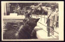JARDIM ZOOLOGICO De LISBOA Guarda A Alimentar Hipopotamo. Vintage Photo Postcard ZOO W/HIPPO. Portugal - Lisboa