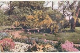 Illustrateur  - English Garden Jardin à L'anglaise - Unused - PLI - 1900-1949
