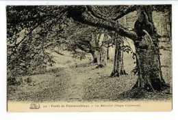 Forêt De FONTAINEBLEAU - Les Belleydier (Gorges D'Apremont) - Fontainebleau