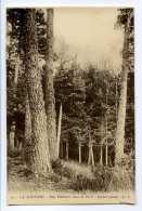 LA LOUVESC - Une Clairière Dans La Forêt - Sapins Géants - La Louvesc