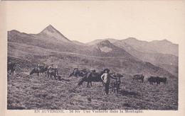 CPA Animée (15) CANTAL Une Vacherie Dans La Montagne Vacher Bovins - France