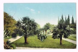 Crimée - Allée Des Palmiers - Jardin Nikitski - 1911 - Ukraine - Russia - Ukraine