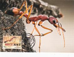 Australia 2014 Things That Sting,Bull Ant, Maximum Card - Maximum Cards