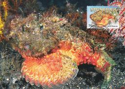 Australia 2014 Things That Sting,Stonefish, Maximum Card - Maximumkaarten