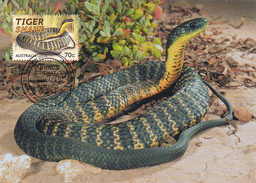 Australia 2014 Things That Sting,Tiger Snake, Maximum Card - Maximum Cards