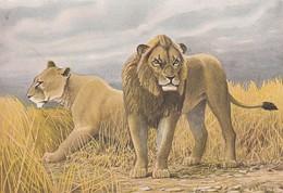 ANIMAUX----LIONS--ILLUST.  P.  BARRUEL--- Voir 2 Scans - Lions