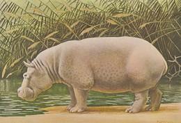 ANIMAUX---HIPPOPOTAME--ILLUST.  P. BARRUEL-- Voir 2 Scans - Hippopotames