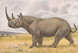 ANIMAUX---RHINOCEROS D'AFRIQUE--ILLUST.  P. BARRUEL-- Voir 2 Scans - Rhinocéros