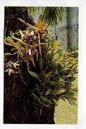 STUDY OF ORCHID ON PALM TREE   BARBADOS, W.I. - Postcards
