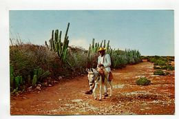 """Typical Country Road Cactus-lined Dirt-road In The Countryside (known As """"koonookoo"""" To The Native). CURACAO, N.A. - Postcards"""