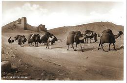 Vers Palmyra Caravane Dromadaires - Siria
