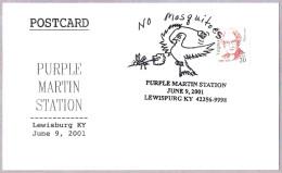 GOLONDRINA PURPUREA - PURPLE MARTIN - Progne Subis. Mosquito. Lewisburg KY 2001 - Swallows