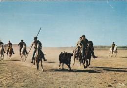 GARDIANS POURSUIVANT UN TAUREAU (dil45) - Toros