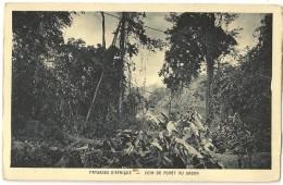 S5317  - Paysage D' Afrique - Coin De Forêt Du Gabon - Gabon