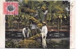 PANAMA - Loading A Car Of Banabas, ISTHMUS OF PANAMA - Panama