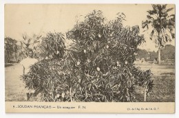 S5326  - Soudan Français -  Un Manguier - Soudan