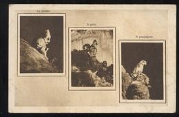 GROTTE DI POSTUMIA - ISTRIA - TRIESTE - ANNI 20-30  UNA BIZZARRIA DELLA NATURA: LO GNOMO IL GALLO IL PAPPAGALLO - Trieste