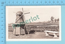 Holland Mich. USA - Nelis Tulip Field, Real Photo  2 Scans - Etats-Unis